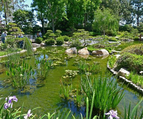 Earl Burns Miller Japanese Garden: A tranquil setting!