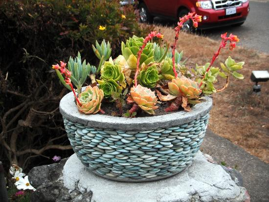 ‪‪Mendocino Art Center‬: Flowering succulents in a lovely pebble pot in the Mendocino Arts Center garden in July 2012.‬