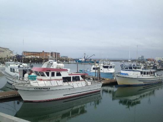 Westport Bayside Bed & Breakfast: Charter boats for fishing tours at our marina