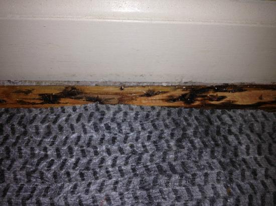 The Suites at Hershey: moldy carpet tack pic of moldy carpet too hard to see in bedroom