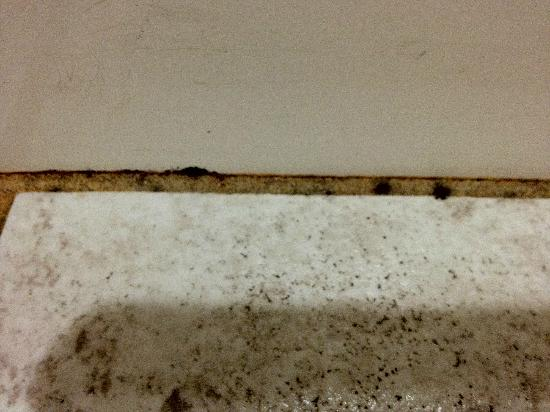 The Suites at Hershey: moldy floor