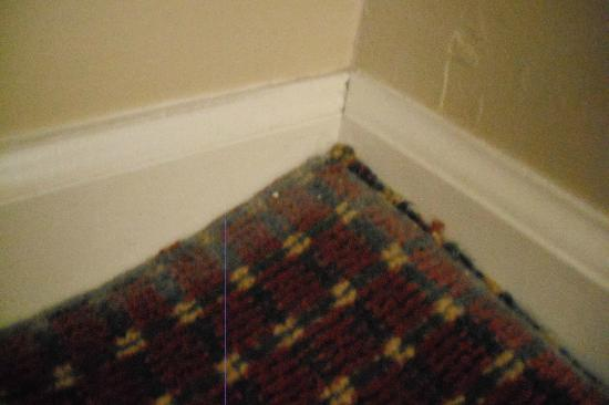 The Suites at Hershey : Moldy carpet in bedroom