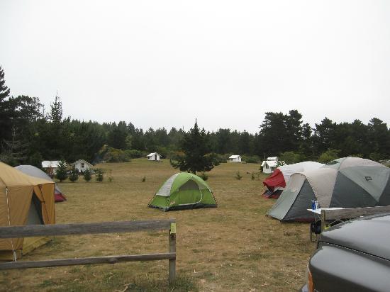 Tent Area Picture Of Santa Cruz North Costanoa Koa
