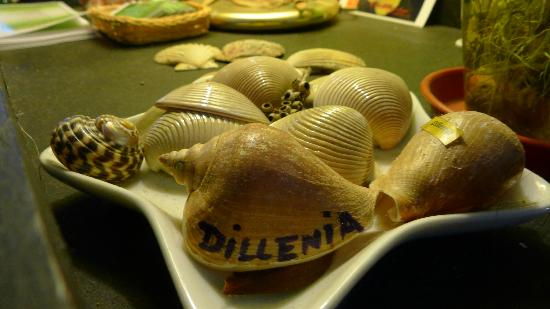 Dillenia Guest House: decoration (2)
