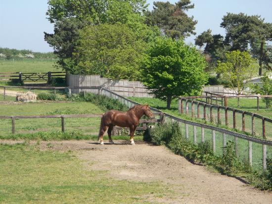 Suffolk Punch Trust: Archilles