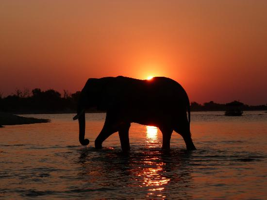 Sanctuary Chobe Chilwero: Sunset