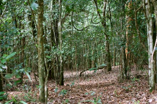 Karura Forest: A typical path in the forest.