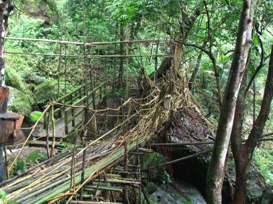 Cherrapunjee Holiday Resort: Root Bridge