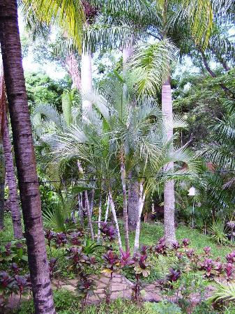 Hotel Selva Verde : Een paradijs