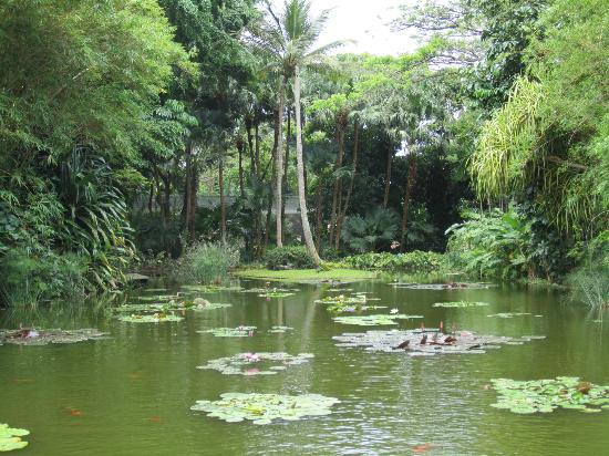 Jardin Botanique de Deshaies: Pond at the entrance