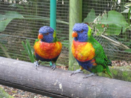 Jardin Botanique de Deshaies: Happy birdy