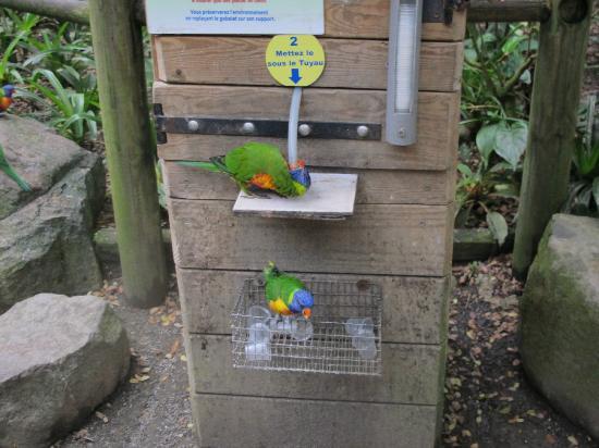 Jardin Botanique de Deshaies: Feed the birdy