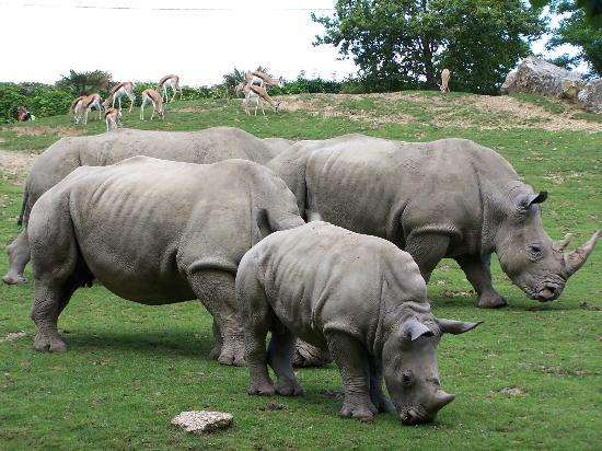 Saint-Aignan, France : Rhinocéros