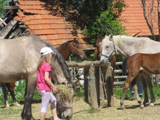 Linden Tree Retreat & Ranch : gentle horse whisperer, my daughter