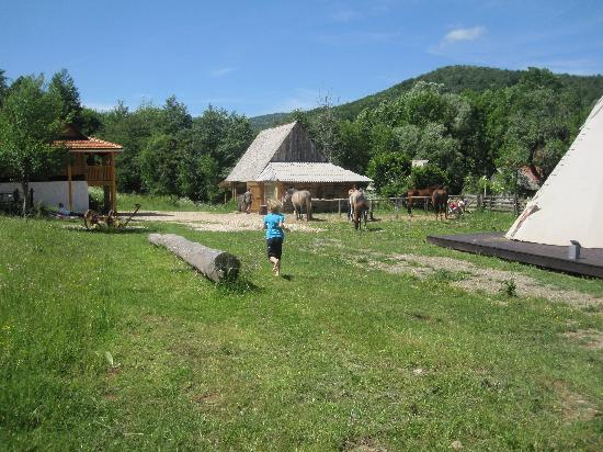 Linden Tree Retreat & Ranch : bearfoot runner , my son