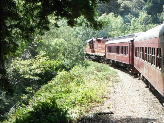 Skunk train going around bend.