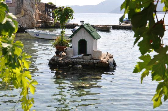 Kale Pansiyon: duck house