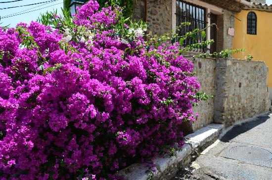 Haut de Cagnes : Flower filled streets and pathways