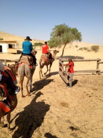 Negev Camel Ranch: The Adventure Begins