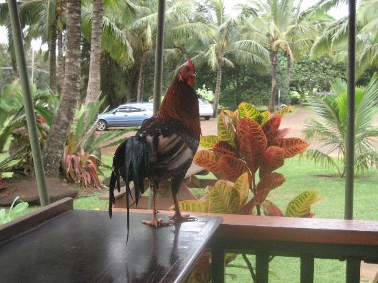 Moloaa Sunrise Fruit Stand: A friendly guest. ;-)