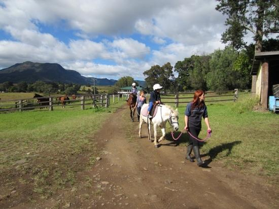 Cedar Glen Farmstay: horse riding