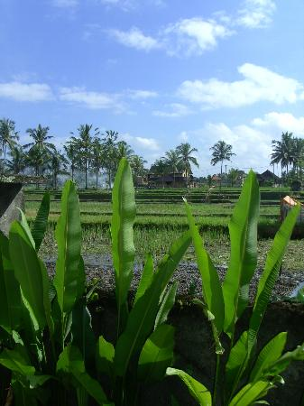 Nirwa Ubud Homestay: Uitzicht slaapkamer