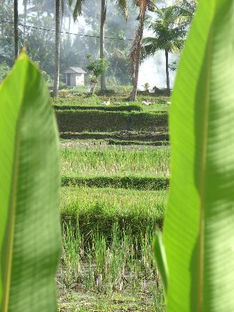 Nirwa Ubud Homestay照片