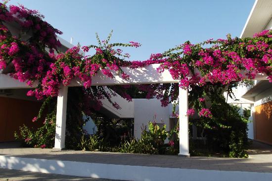 Stafilia Beach : LES BOUGAINVILLES