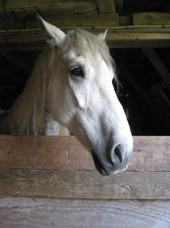 Rosebarb Farm: Horse