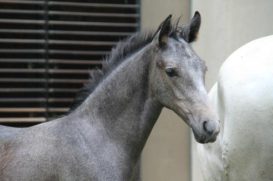 Spanish Riding School: Foals and mares in the courtyard, 5 - 6 pm free viewing.
