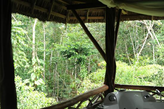 Napo Wildlife Center Ecolodge: View from back porch