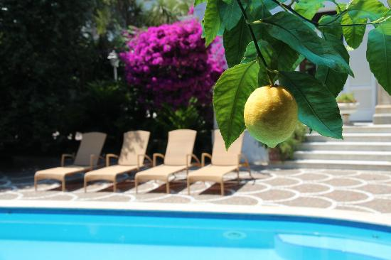 Relais Villa Savarese: Citrusgarden and poolarea