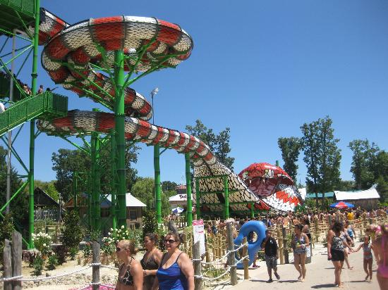 King Cobra - Picture of Six Flags Hurricane Harbor, Jackson
