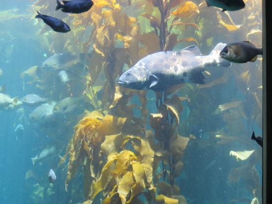 Sea Horse Picture Of Monterey Bay Aquarium Monterey