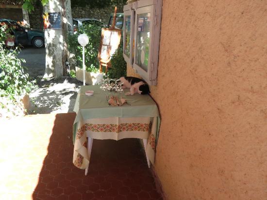 Katzen im Auberge du Lac