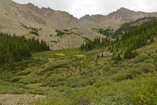 Cathedral Lake Trail: alpine meadow