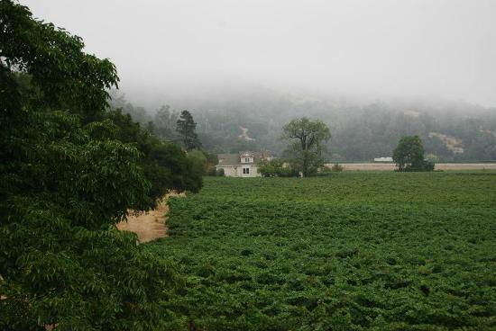Auberge on the Vineyard: Another view from the balcony- fog being burned off in the morning