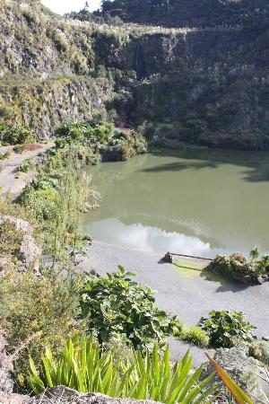 Whangarei Quarry Gardens: Top down view fro cactus area