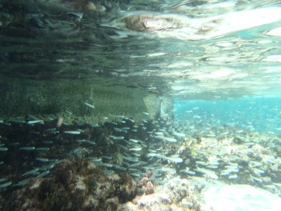 Spring Bay fish