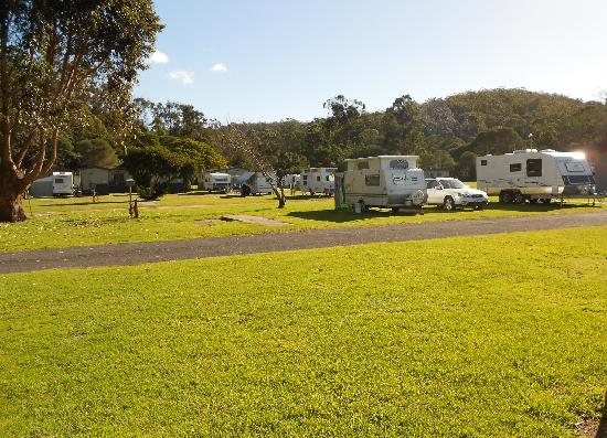 Sapphire Valley Caravan Park : Some of our Grassy Powered Sites
