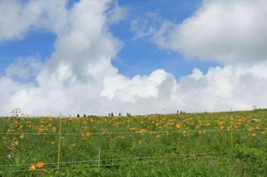 Chino, Jepang: 車山肩のニッコウキスゲ群落