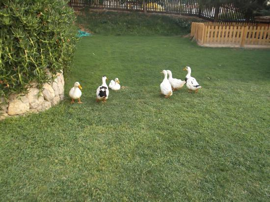 Antas Deluxe Aparts: The ducks from the apartments