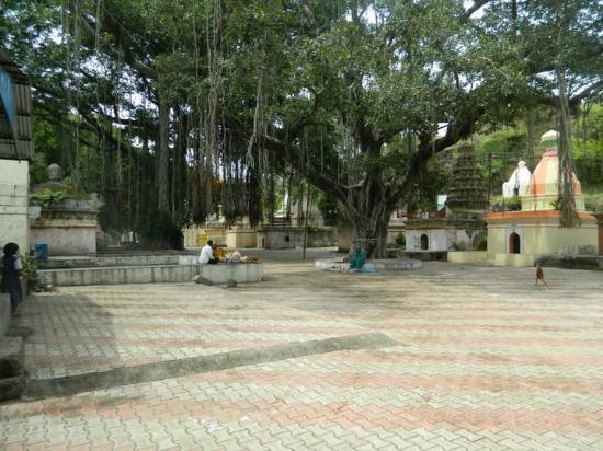 Sagareshwar Wildlife Sanctuary照片