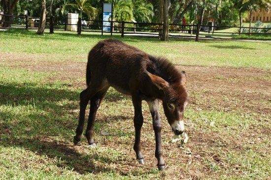 Sandos Playacar Beach Resort: Tito the new donkey