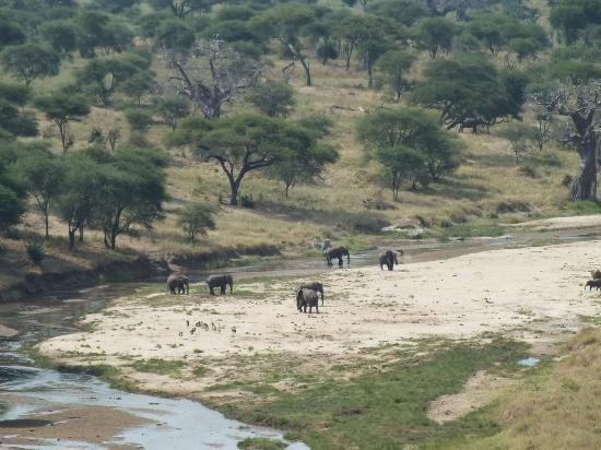 Tarangire Safari Lodge : View of the river from our tent