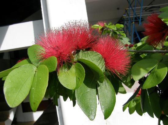 Sari Village Holiday Homes: Local flora