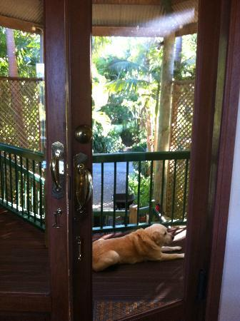 Maleny Hideaway: The pet dog