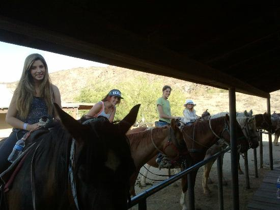 Arizona Horses (Ponderosa Stables and South Mountain Stables)照片