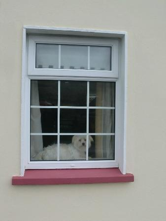 Teach Gleann Dobhar: there a nice, sweet and friendly dog