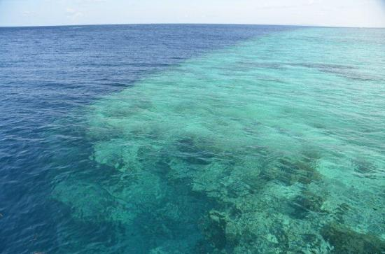 Wakatobi Dive Resort: The house reef wall